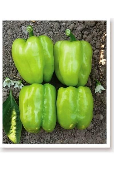 Agrodal Tarım Ata Tohumu Tatlı Kandil Dolma Biberi 1000 Adet Tohum