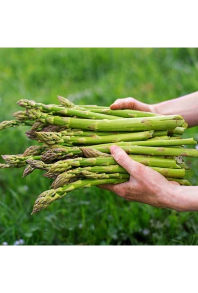Agrodal Tarım Ata Tohumu Yerli Kuşkonmaz Tohumu 40 Adet Tohum