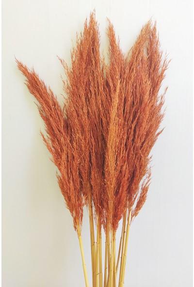 Eçiçek Şoklanmış Pampas Otu Turuncu Renk 100 cm 15'li Demet