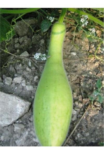 Agrodal Tarım Ata Tohumu Yerli Haylan (Heyelan) Kabak 20 Adet Tohum