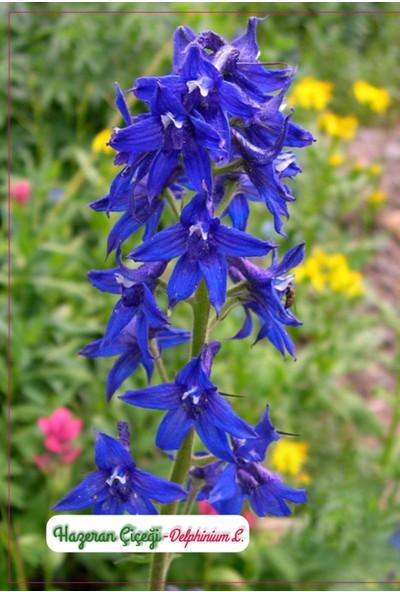 Agrodal Tarım Hazeran Çiçeği Tohumu
