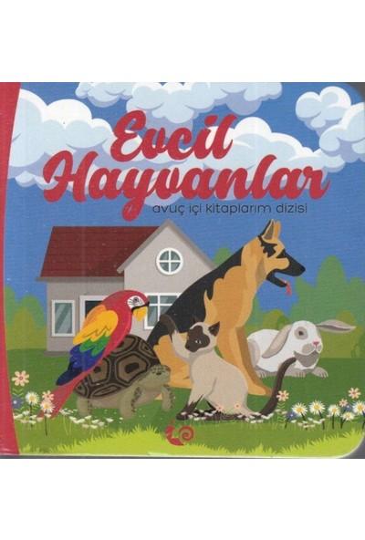 Evcil Hayvanlar - Avuç Içi Kitaplarım Dizisi - Meltem Erinçmen Kanoğlu