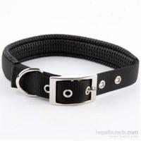 Pet Zoom Köpek Tasması - Siyah