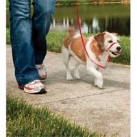 Easy Walk™ Headcollar -Small Kırmızı Köpek Tasması