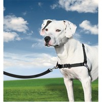 Easy Walk™ Harness - Medium Siyah Köpek Tasması