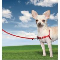Easy Walk Harness Köpek Göğüs Tasması X Small