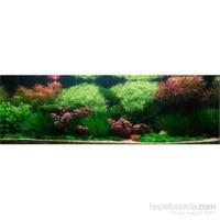 Reeflowers Bitki Akvaryumları Sertifikalı Uzmanlık Eğitimi