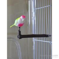 Rotipet Yaylı Kuş