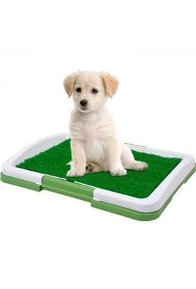 Buffer Yavru Köpek Lazımlık