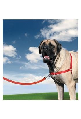 Easy Walk Harness Köpek Göğüs Tasması X Large