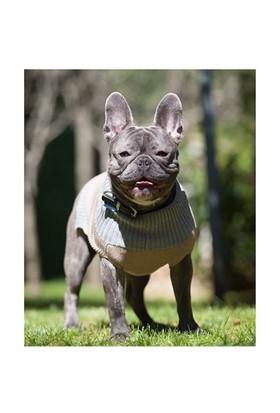 Wuufbox Köpek Kazağı M Bej-Gri