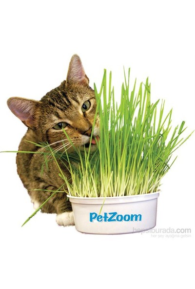 Pet Zoom Kedi Çimi Büyük Boy