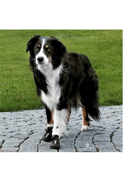 Trixie Köpek Botu Medium Siyah 2 Adet West Highland,Terrier