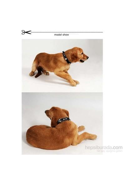 Ergocomfort Köpek Boyun Tasması L Siyah