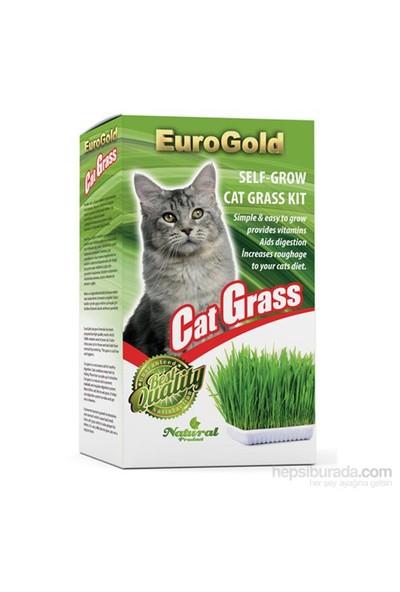 Eurogold Kedi Çimi