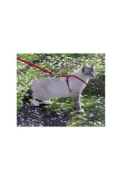 Easy Walk™ Cat Harness & Lead - Small Kırmızı Kedi Tasması