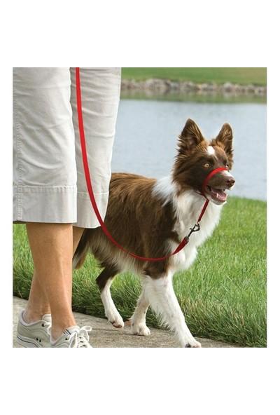 Easy Walk™ Headcollar - Medium Kırmızı Köpek Tasması