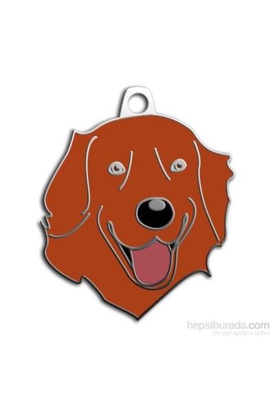Dalis Pet Tag - Kızıl Golden Retrıever Köpek Künyesi (İsimlik)