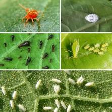 Era Eraorganik Organik Bitki Sinek - Yaprak Biti - Kırmızı Örümcek Ilaç