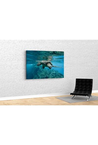 Tablo 360 Deniz Kaplumbağası Kanvas Tablo