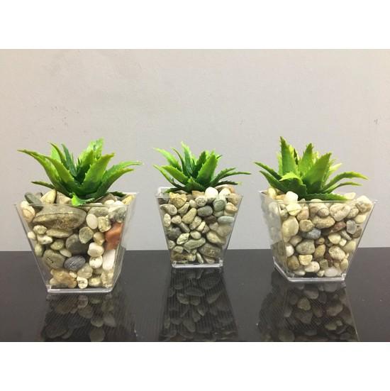 Süs Ağacı Sukulent 3'lü Çakıl Saksıda Yapay Sukulent Succulent Yapay Çiçek